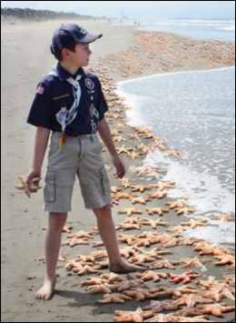 Photo: Boy throwing starfish back into the sea